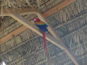 Macaws in Mavita